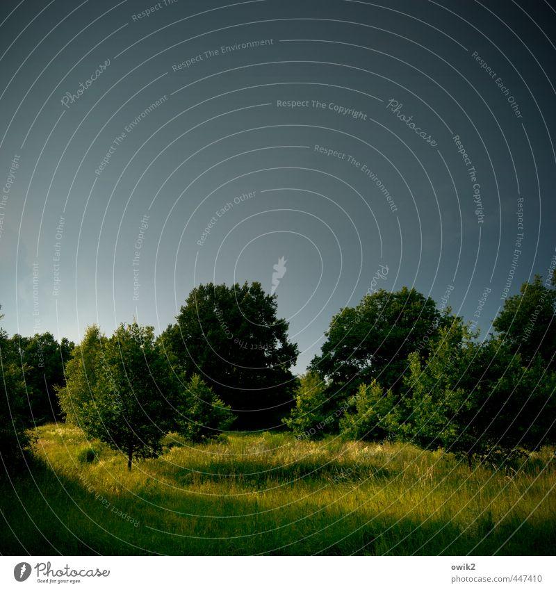 Lichtung Umwelt Natur Landschaft Pflanze Klima Wetter Schönes Wetter Baum Gras Sträucher leuchten stehen Wachstum natürlich blau gelb grün geduldig ruhig