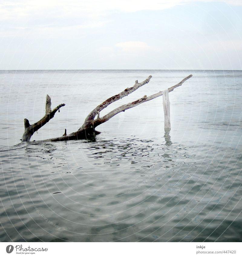 Nasses Hemd Urelemente Wasser Himmel Horizont Sommer Schönes Wetter Baum Meer hängen nackt nass blau weiß Ende Endzeitstimmung Natur Tod Verfall Vergänglichkeit