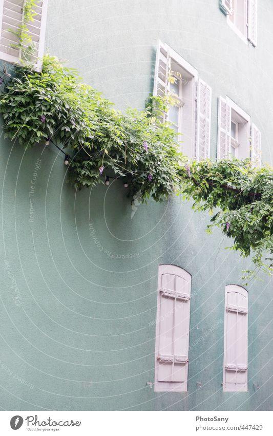 hübsches Häuschen in Freiburg blau weiß Farbe Haus Fenster Wand Gebäude Autofenster Zufriedenheit türkis Fensterladen