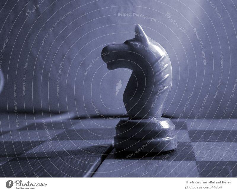 PFERD blau weiß schwarz Spielen Stil Denken Feld Pferd Reinigen Konzentration Schach Schachbrett Schachfigur Mathematik Schweiß Gegner