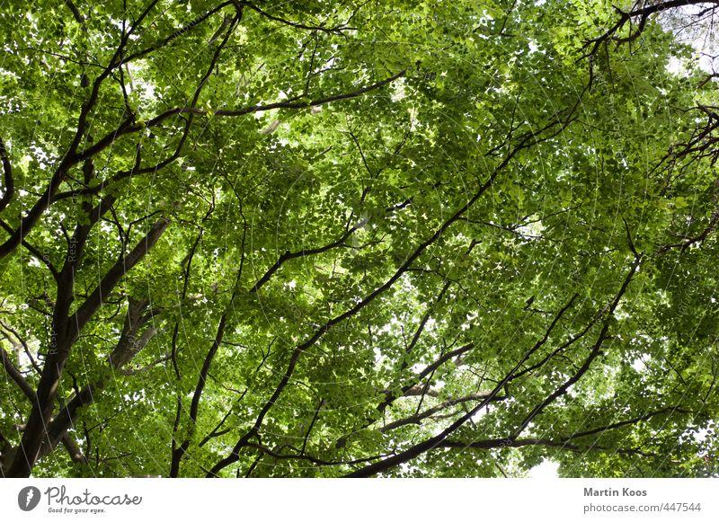 Blattwerkstatt Natur schön grün Pflanze Baum natürlich wild groß ästhetisch Ast