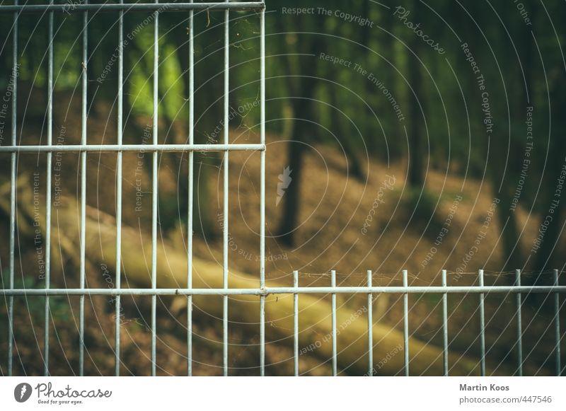 drinnen oder draußen Natur Ferien & Urlaub & Reisen grün Pflanze Baum Einsamkeit Landschaft Ferne Wald Freiheit Horizont braun Ordnung modern Perspektive kaputt