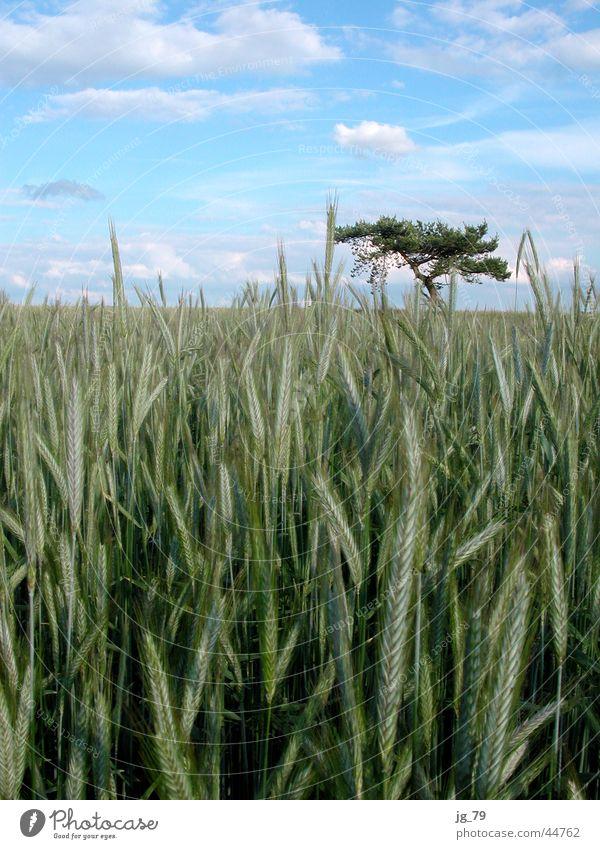 Feldbusch?! Himmel Baum Sommer Wolken Einsamkeit Wiese Stimmung Sträucher Korn verloren