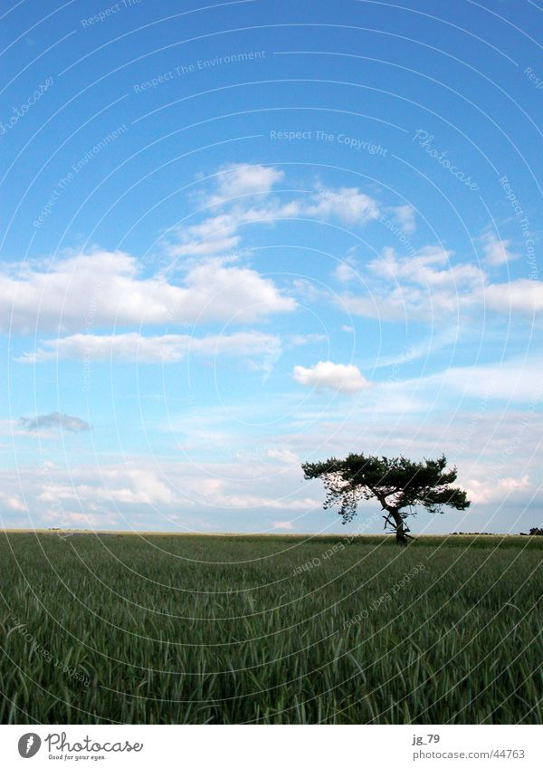 blue sky passes bye Himmel Baum Sommer ruhig Wolken Einsamkeit Feld Wetter Kornfeld