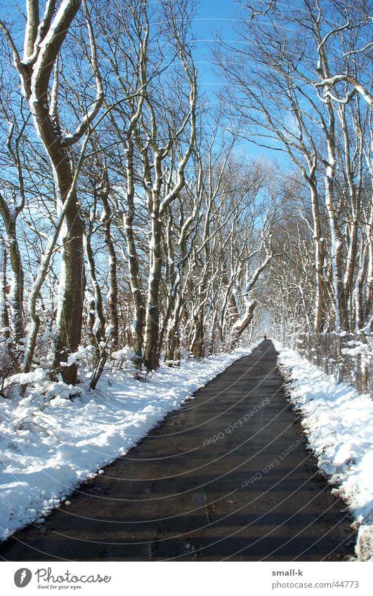 Winterwonderland Himmel Baum Winter kalt Schnee Wege & Pfade Allee