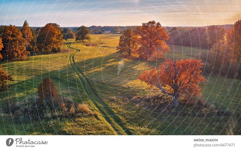 Landstraße auf grünen Feldern. Sonniges Luftbildpanorama, Weißrussland. Landschaft mit Korkeichen Baum Herbst Wiese Eiche Park Saison Wald Panorama im Freien