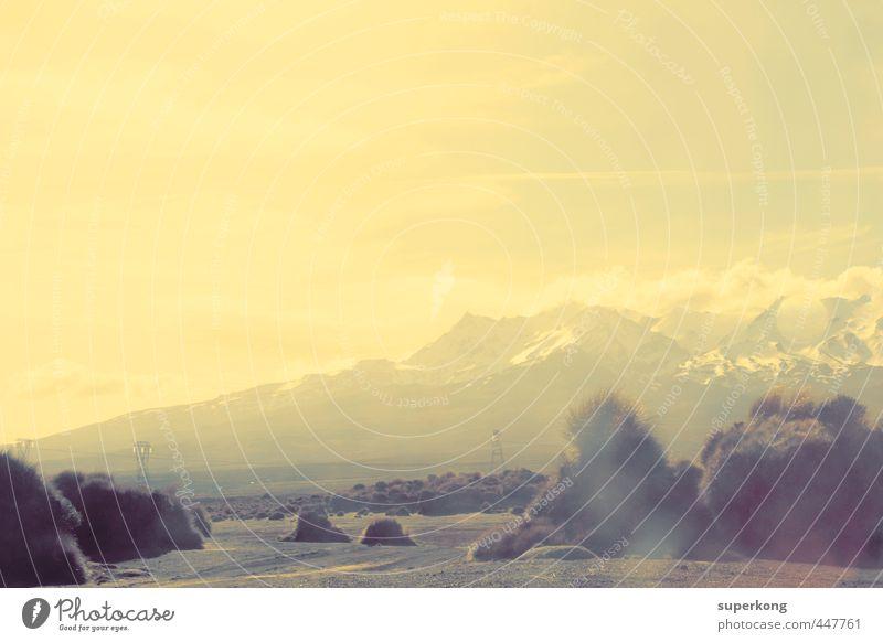Neuseeland Umwelt Natur Landschaft Pflanze Erde Sand Luft Himmel Horizont Sonne Frühling Sommer Klima Wetter Schönes Wetter Wärme Gras Sträucher Wildpflanze