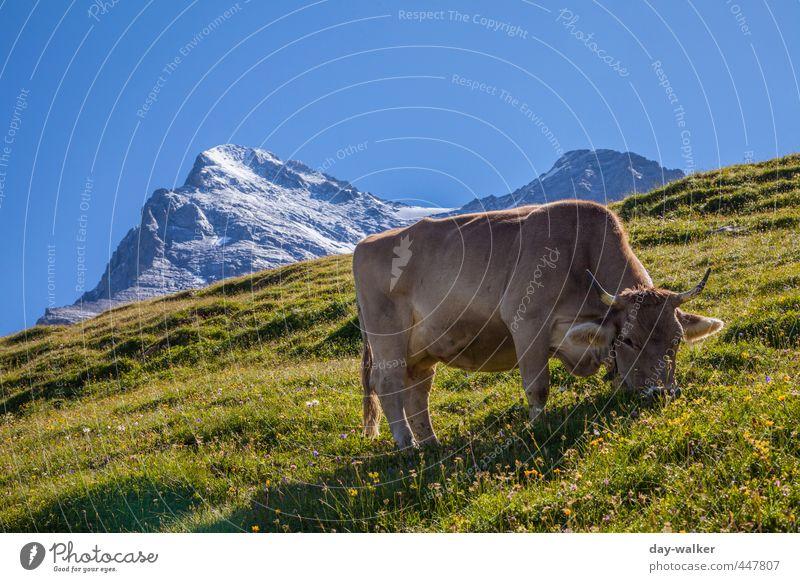 Untermieter | Mit Vollpension Himmel Natur blau grün weiß Pflanze Sommer Landschaft Tier Berge u. Gebirge Gras Felsen Luft hoch Schönes Wetter Urelemente