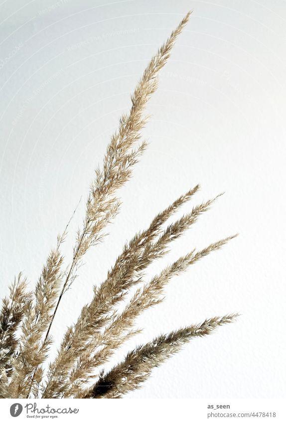 Gräser Natur Herbst braun Pflanze Gras Menschenleer Umwelt natürlich Schwache Tiefenschärfe Farbfoto Gedeckte Farben Tag Getrocknet Silhouette grafisch