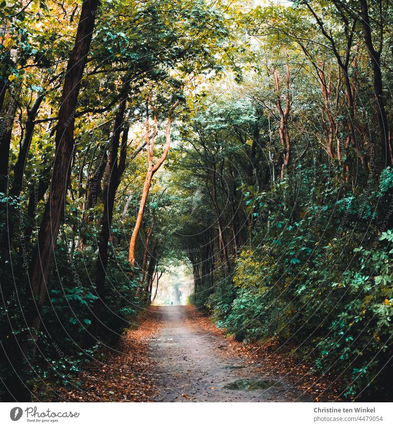 Herbstlicher Waldweg nach dem Regen. Blick wie durch einen Tunnel in helles diesiges Licht in der Ferne. Ganz klein und unscharf ist die Silhouette eines Wanderers zu sehen.