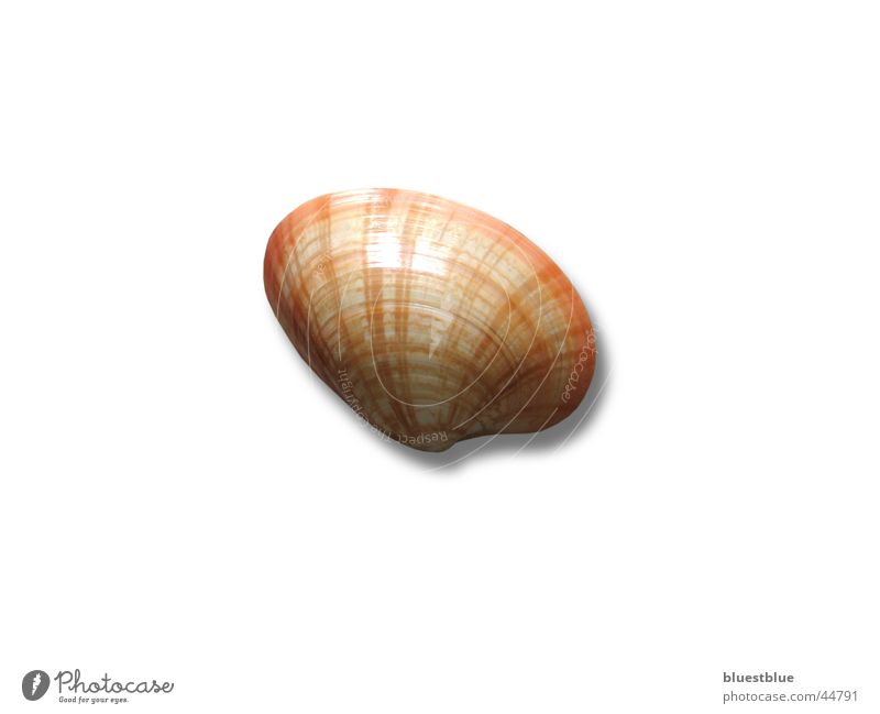 muschel Verkehr Muschel