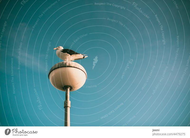 Möwe genießt die gute Aussicht Ausschau sitzen stehen Meer Natur beobachten Vogel Tier Küste Hafen Küstenlinie Meeresufer Straßenlaterne Straßenbeleuchtung