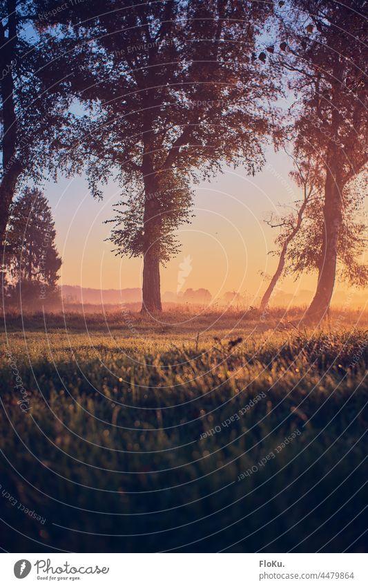 Birken im Morgenlicht bei Sonnenaufgang Herbst Umwelt Natur Landschaft Außenaufnahme Farbfoto Sonnenuntergang Sonnenlicht Baum Licht Sonnenstrahlen Menschenleer