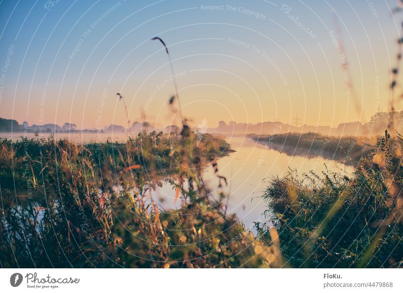 Pinnau im Morgenlicht Schleswig-Holstein Landschaft Natur Umwelt Fluss Nebel Sonnenaufgang Wasser Außenaufnahme Himmel Menschenleer Farbfoto Sonnenlicht