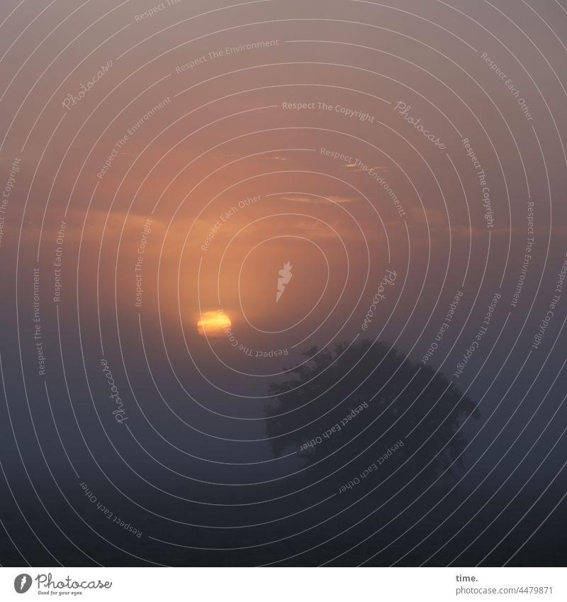 UT Teufelsmoor   Opener Sonne Sonnenaufgang Nebel Baum Himmel Wolken gespenstisch traumhaft kalt horizont stimmung natur frühmorgens phantastisch