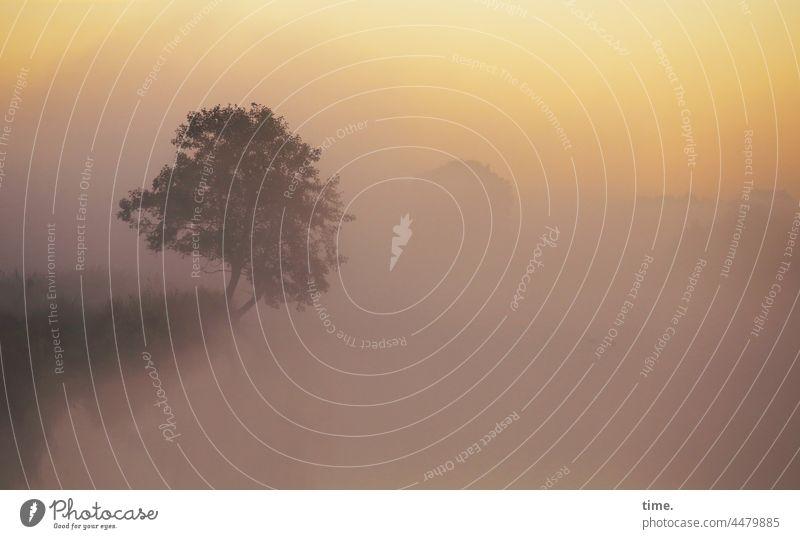 UT Teufelsmoor | Baum am Fluss im Nebel Sonnenaufgang Himmel Wolken gespenstisch traumhaft kalt horizont stimmung natur frühmorgens phantastisch spooky