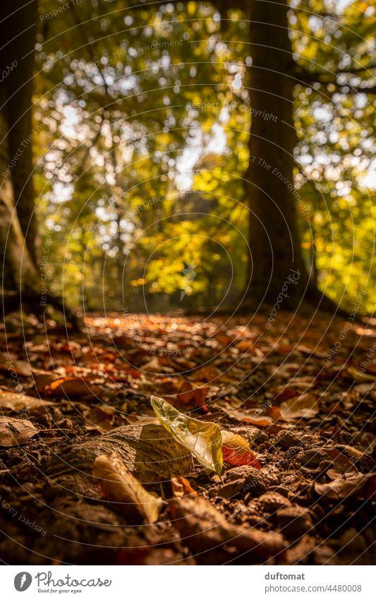 mit Blättern bedeckter Waldboden im Herbst Boden orange golden Baum Natur Blatt fallen Stimmungsbild Jahreszeiten Hintergrund Park Farbe natürlich Pflanze Licht