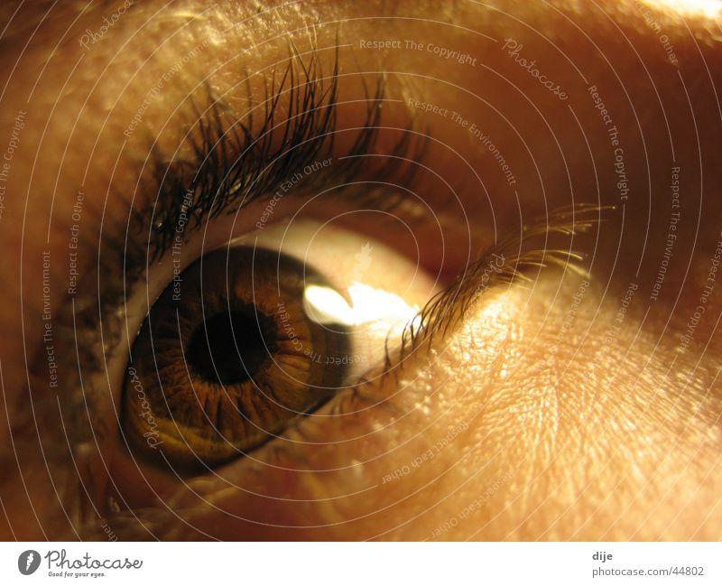 - REHBRAUN - Pupille Wimpern braun Reh Frau Blick Auge Mensch Makroaufnahme Regenbogenhaut