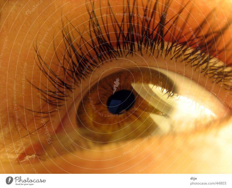Rehbraun mit Lampe Pupille Wimpern Frau Blick Auge Mensch Makroaufnahme Regenbogenhaut