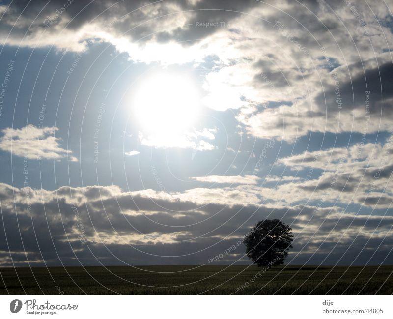 Ein Baum allein im Gerstenfeld Sonne Wolken Einsamkeit Feld