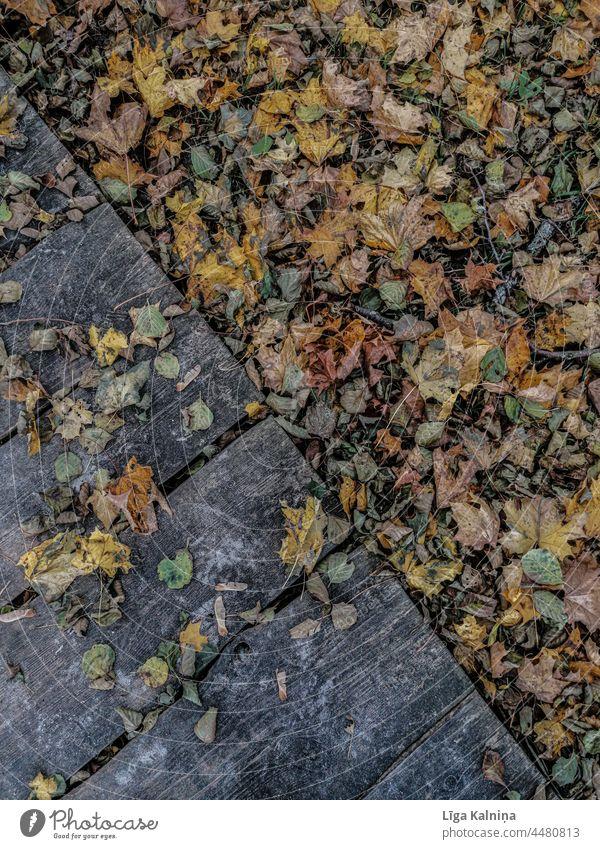 Herbstlicher Hintergrund aus Blättern und Holzplanken Herbstlaub Herbstfärbung Herbstwetter Herbststimmung Natur herbstlich Herbstwald Herbstlandschaft Laubwerk