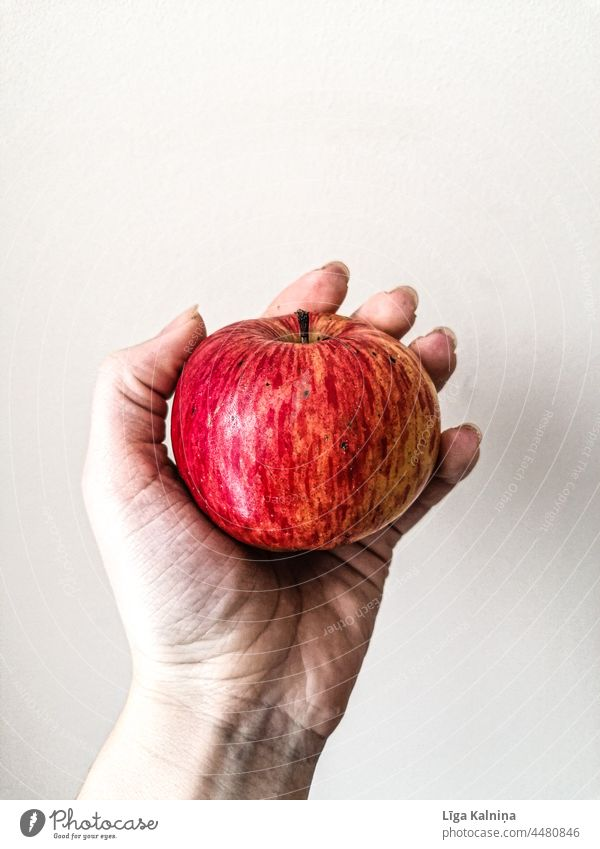 Hand hält einen Apfel Frucht Farbfoto Lebensmittel rot Ernährung Bioprodukte Gesundheit lecker frisch Vegetarische Ernährung Gesunde Ernährung Innenaufnahme süß