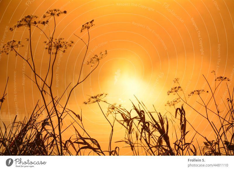UT Teufelsmoor   Gräser im Gegenlicht sonne natur morgens gelb gegenlicht kontrast