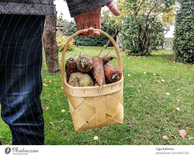 Mann hält Gemüse Lebensmittel Vegetarische Ernährung Vegane Ernährung Diät Gesundheit Gesunde Ernährung Foodfotografie frisch Bioprodukte Essen Farbfoto lecker