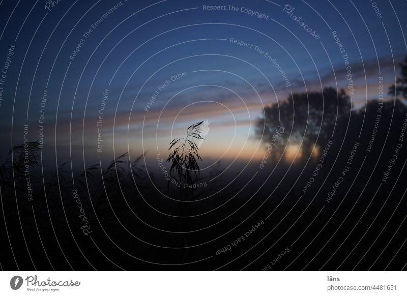 UT Teufelsmoor l der Tag beginnt Moor Morgendämmerung Sonnenaufgang Gras Bäume Natur Landschaft Außenaufnahme Farbfoto ruhig
