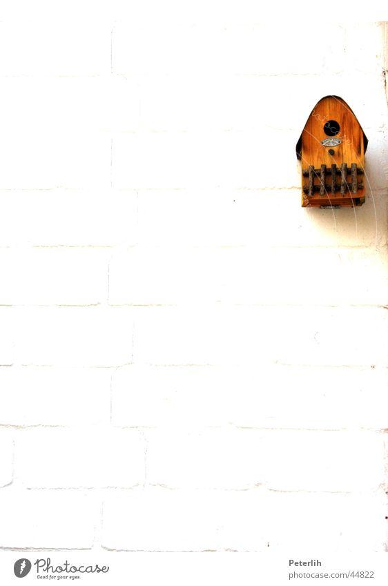 Ein Heim für Vögel Haus Wand Garten Holz hell Vogel Freizeit & Hobby