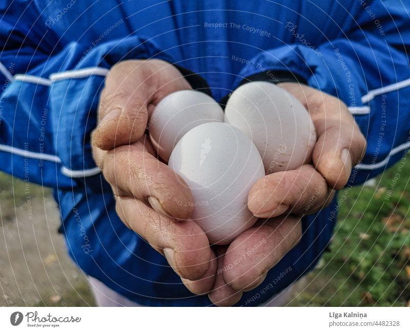 Die Hände halten drei Eier Halt Finger Hand Mensch Handfläche Körperteil Arme Lebensmittel Foodfotografie Essen und Trinken
