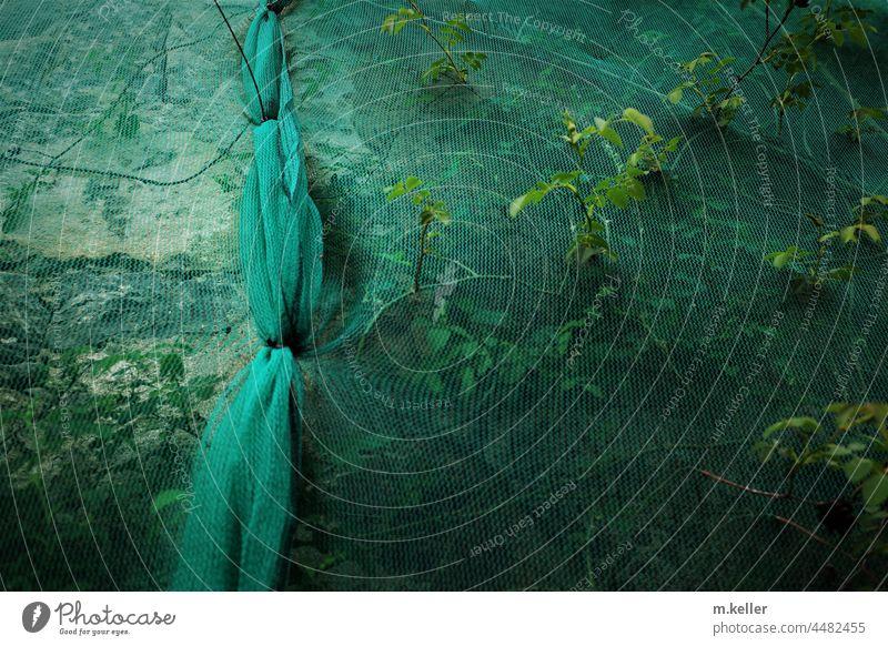 Pflanzen, die durch ein Netz an einer Baustelle wachsen Geduld Zeit Fassade Trotz grün Natur Kraft Knoten Erinnerung Zeitläufte vergessen zugedeckt eingesperrt