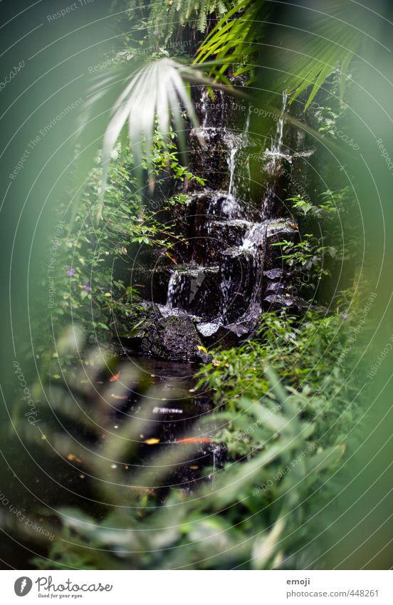 Jungle Natur grün Pflanze Landschaft Umwelt See natürlich Sträucher Urwald