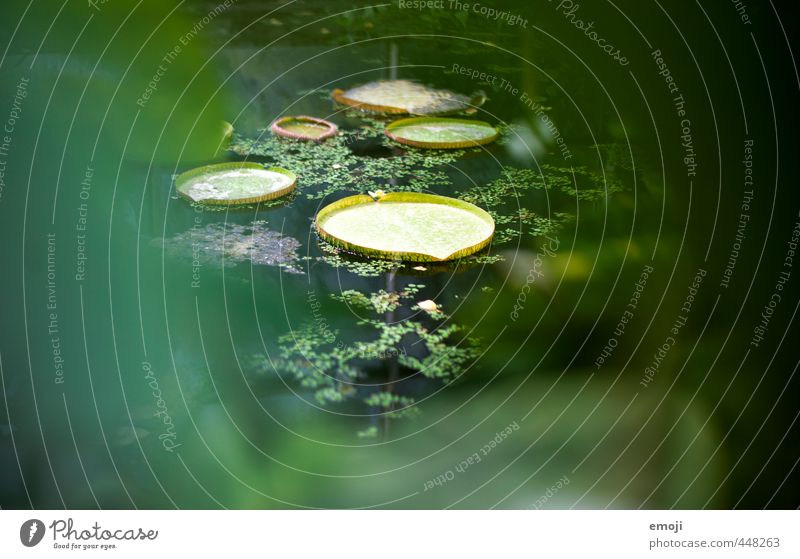 Landeplatz Natur grün Pflanze Blatt Umwelt natürlich Sträucher exotisch Teich Grünpflanze Seerosenblatt
