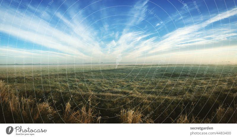 [Teufelsmoor 2021] Es ist alles eine Frage der Perspektive. (und die ist der Wahnsinn) Moor Heide Landschaft Himmel Wolken Morgendämmerung morgens Sonnenaufgang