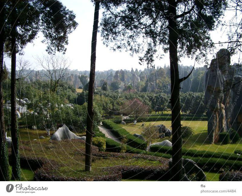 China II Natur Baum Wiese Gras Stein Park