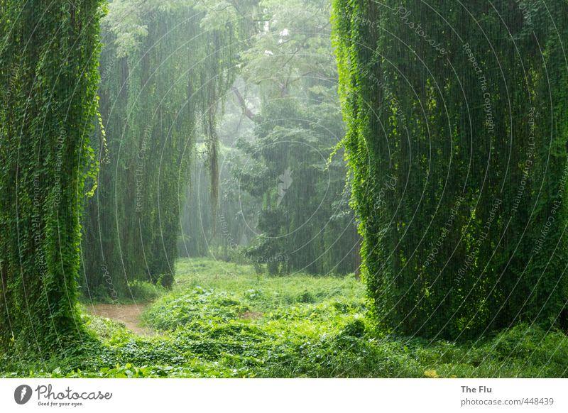Regenwald Natur Ferien & Urlaub & Reisen Pflanze grün Wasser Baum Ferne Umwelt Wege & Pfade Regen Tourismus Wetter Wassertropfen Schönes Wetter Abenteuer exotisch