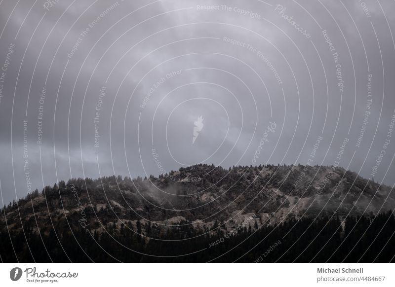 Erster Schnee Puderzucker Winter Winterstimmung Berge u. Gebirge Tannenbaum kalt Alpen Landschaft Natur Wetter Frost Wolken Kälte kälteeinbruch Tannheimer Tal