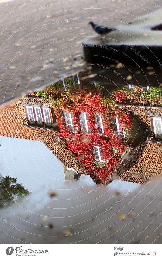 Herbst in der Pfütze - mit herbstlichem wilden Wein bewachsenes Haus spiegelt sich in einer Pfütze Spiegelung Gebäude wilder Wein Herbstfärbung Dach Dachpfannen
