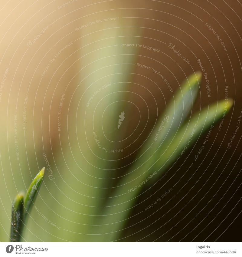 Grashälmchen grün Pflanze Wärme Bewegung klein Stimmung braun Wachstum einfach zart Halm fein zartes Grün