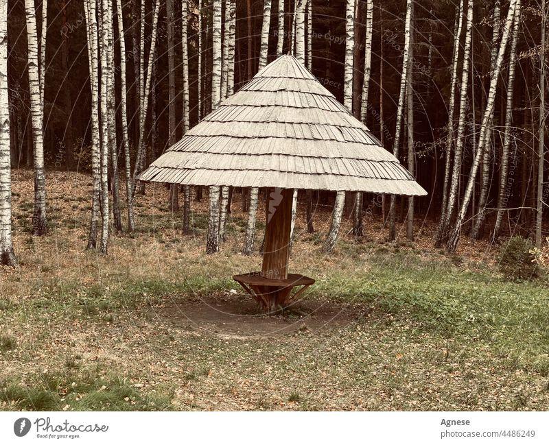 Laube im Wald Holz hölzern Märchen Birke Birkenwald Herbst fallen herbstlich Forstwirtschaft
