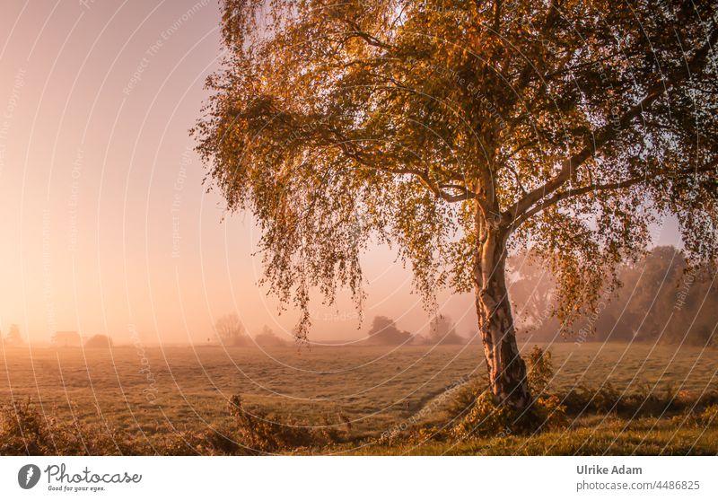 UT Teufelsmoor 2021- Lieblingsbaum ... die Birke im Teufelsmoor Sonnenaufgang Osterholz-Scharmbeck Baum Nebel Morgendämmerung Menschenleer Landschaft Natur