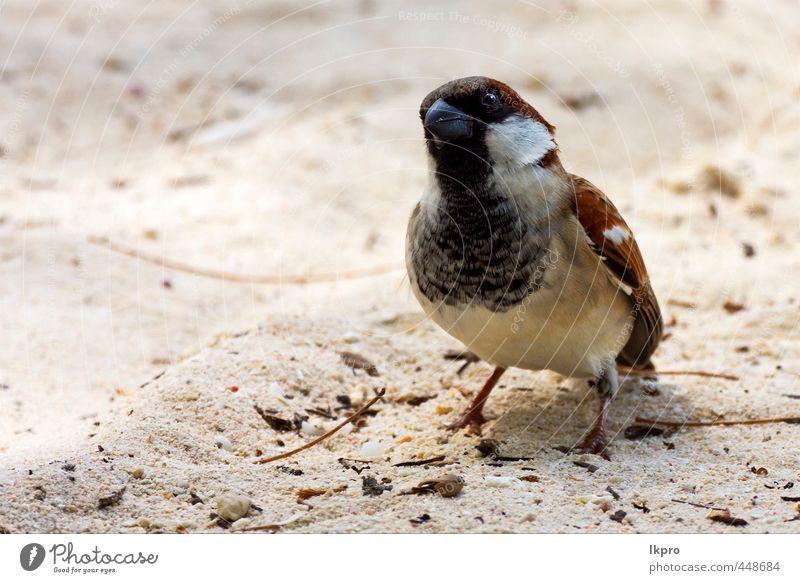 Natur Ferien & Urlaub & Reisen weiß Tier schwarz gelb Küste grau Sand Linie braun Vogel dreckig Ausflug Feder Seite