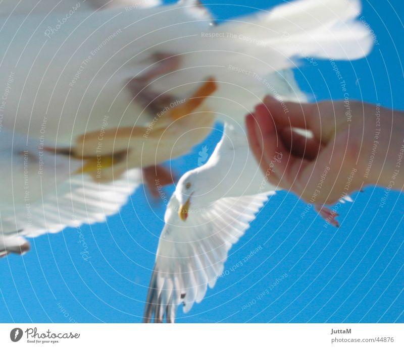 meins, meins, meins .... Möwe füttern Hand Futter Meer Channel Himmel