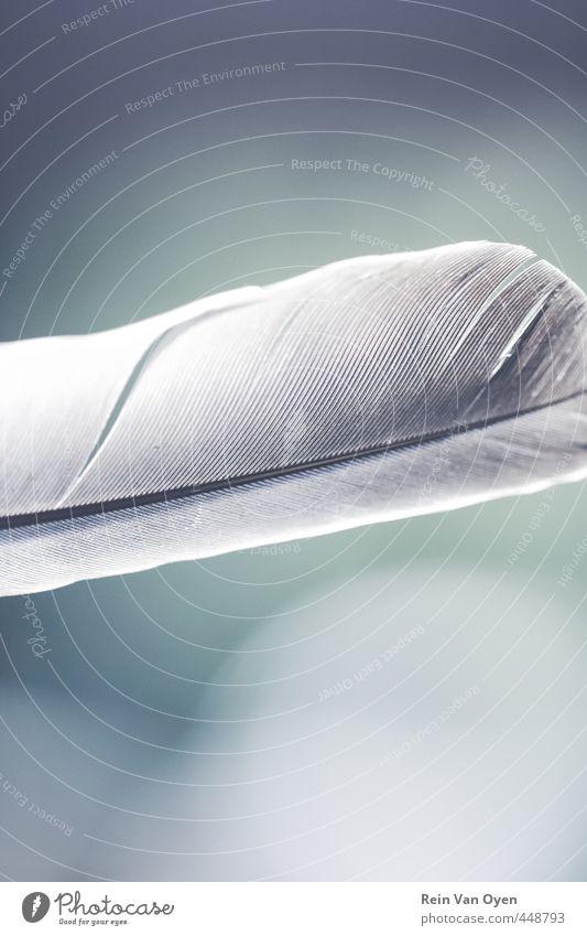 Feder Vogel ruhig sanft Glätte weiß grau Unschärfe Farbfoto Gedeckte Farben Außenaufnahme Nahaufnahme Detailaufnahme Makroaufnahme Menschenleer