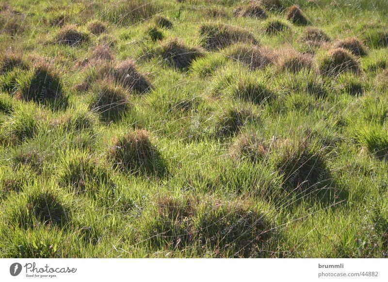 Kamelfriedhof Natur grün Wiese Zwerg Moor Biotop Grasbüschel Land Art