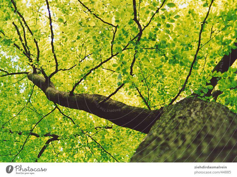 ameisenblick Baum grün Wald Holz Ast