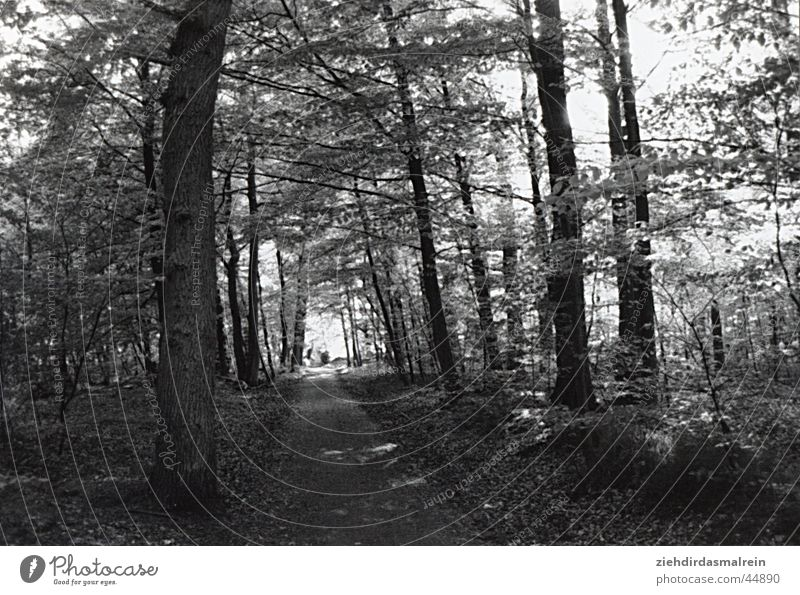 waldspaziergang Natur weiß Baum schwarz Wald Wege & Pfade Allee Grauwert