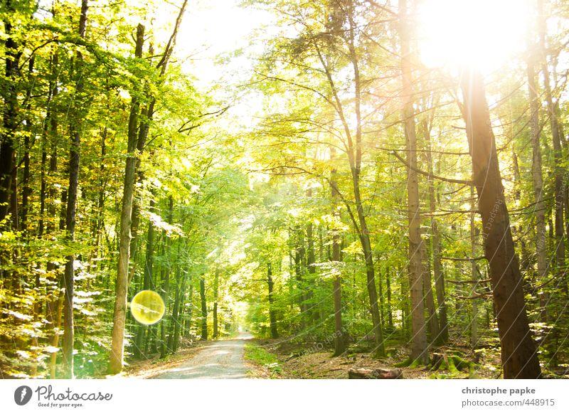 Märchenwald Pflanze Sonne Sonnenlicht Sommer Schönes Wetter Baum Wald hell Wachstum Wege & Pfade Photosynthese Farbfoto Außenaufnahme Menschenleer Tag
