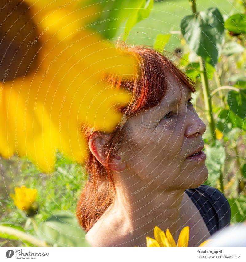 UT Teufelsmoor   im Sonnenblumenfeld Frau gelb Blume Sommer Frauengesicht natürlich warm Natur Blüte Außenaufnahme Sonnenlicht